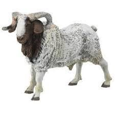 The Billy Goat