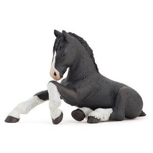 Black Shire Foal