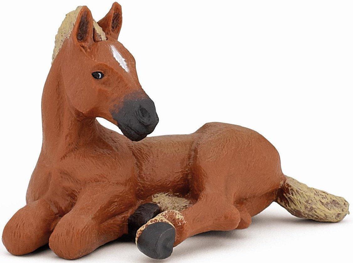 American Quarter Horse Foal