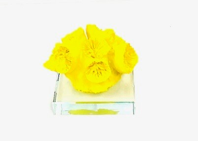 Coral Paper Weight Yellow