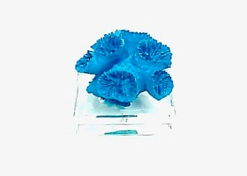 Coral Paper Weight Blue